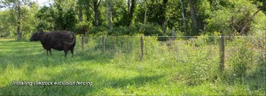 Richard Farland Exclusion Fencing